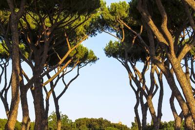 Sant'Alessio Garden, Rome, Italy