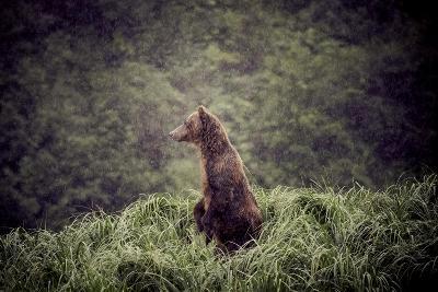 Kodiak Island Bear, Kodiak, Alaska