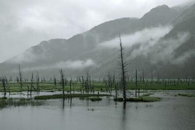 Swampy Landscape in Anchorage, Destroyed by a Tsunami, Alaska