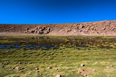 Oasis in the Atacama Desert, Chile and Bolivia