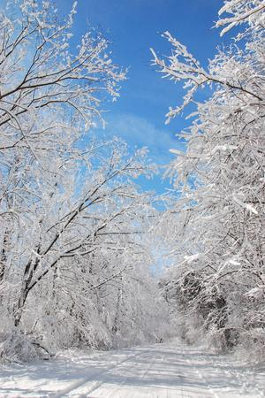 Winter in Eagle Creek Park, Indianapolis, Indiana, USA