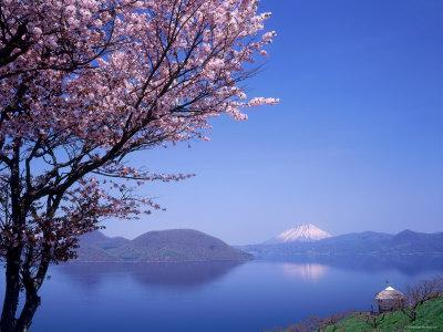 Cherry Blossoms and Lake Toyah