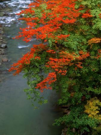 Autumn Leaves Over the River