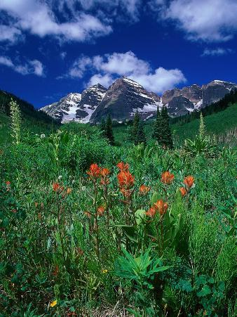 Wild Flowers and Mountain Maroon Bell, CO