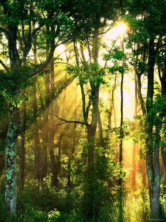 Sunbeams Through The Trees Photographic Print At