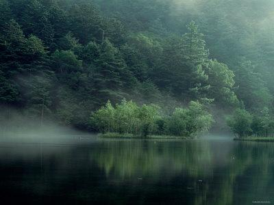 Lake and Forest