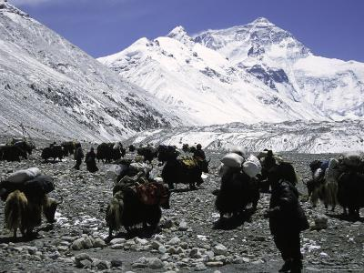 Yaks and Sherpas at the Foot of Himalayan Mountain Range