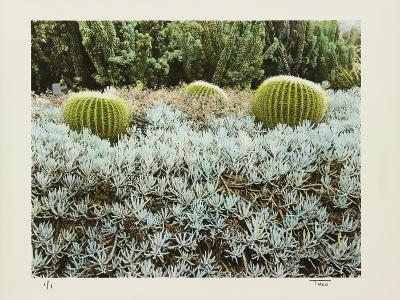California Cactus Garden 1975