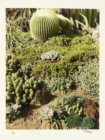 California Cactus Pasadena