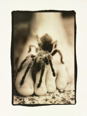 Tarantula on Foot
