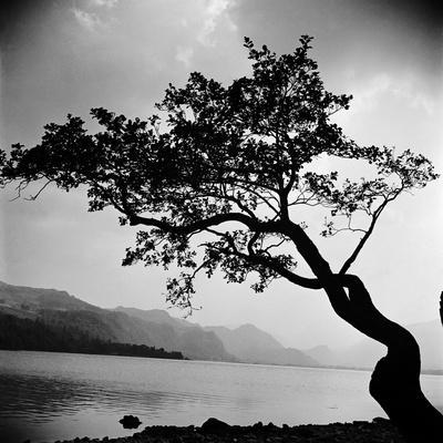 A Windswept Tree Silhouetted Against Bright Sunlight