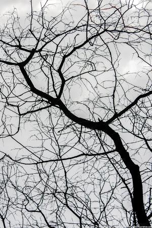 Bare Tree Limbs