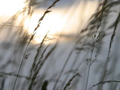 Bright Sunlight Shining on Water Behind a Silhouete of Tall Prarie Grass