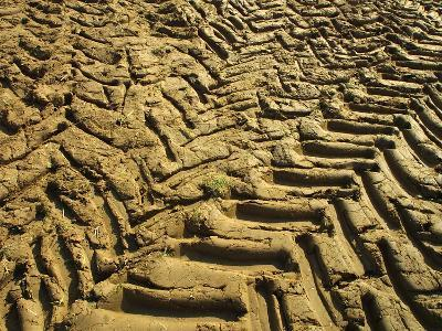 Dirt Field with Tire Tracks