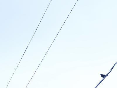 Small Bird Resting on Thin Power Lines