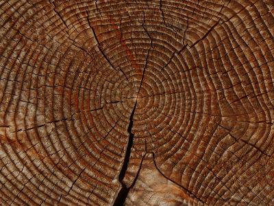 Close-up of the Rings and Cracks of Texture on a Cut Log