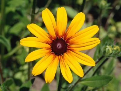 Beautiful and Elegant Daisy Flower