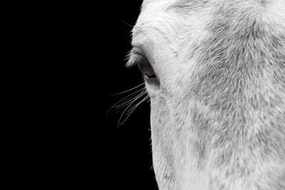 Horse, adult, close-up of head, eyelashes and eye