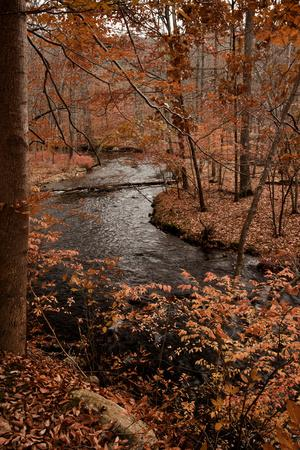River in autumn woodland habitat, Cross River, Ward Poundridge County Park, Salem