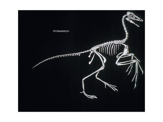 Archaeopteryx Skeleton, Dinosaurs