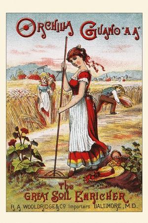 Orchilla Guano Aa