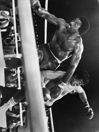 Sylvester Stallone Falling Down on a Boxing Ring