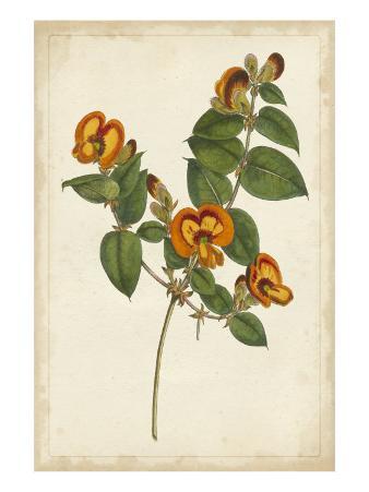 Vibrant Botanicals II