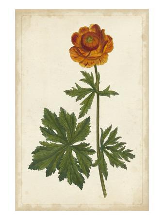 Vibrant Botanicals V