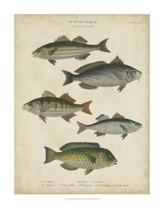 Non-Embellish Ichthyology III