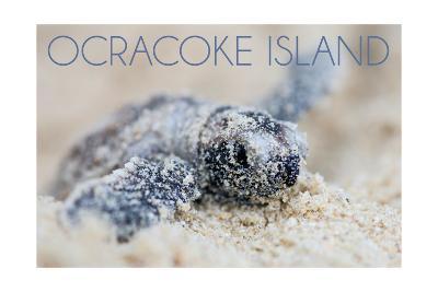 Ocracoke Island, North Carolina - Hawksbill Turtle Hatching