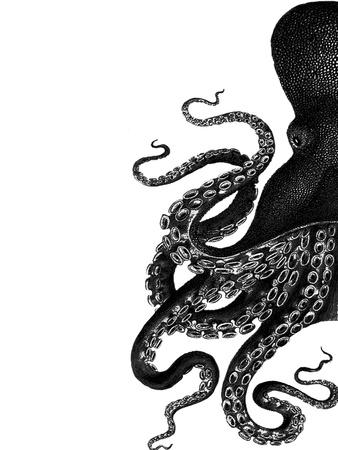 Octopus Black and White a