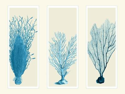 Blue Corals on 3 Panels
