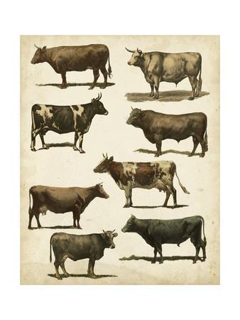Antique Cow Chart