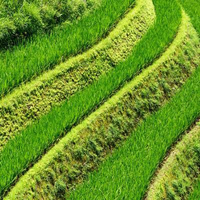 China 10MKm2 Collection - Rice Terraces - Longsheng Ping'an - Guangxi