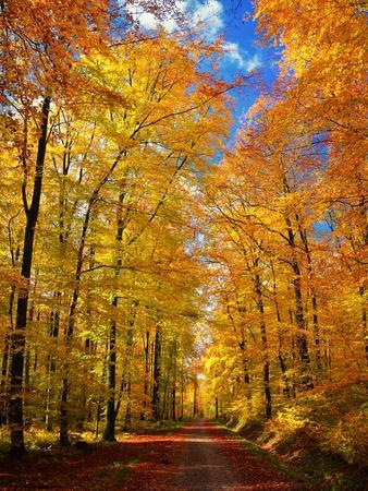 Way to Fall