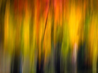 Fall Light 2