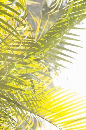 Palm Fonds