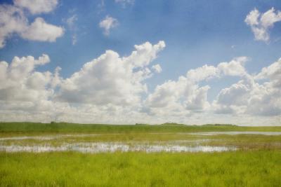 Prairie Slough in Summer