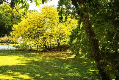 Backyard Color I
