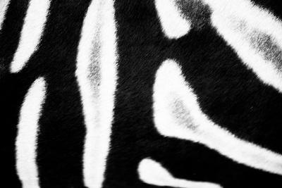 Zebra Fur I