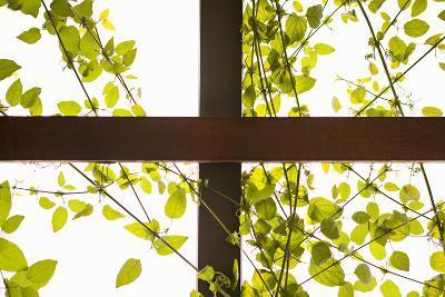 Branches and Lattice
