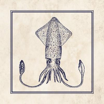 Squid Sq