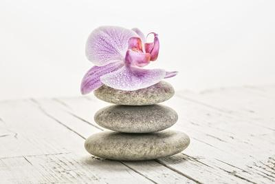 Orchid Blossom on Tower Made of Stones