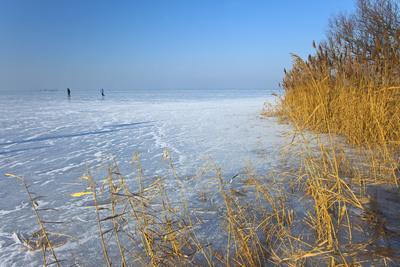 Europe, Germany, Steinhude, Steinhuder Meer, Ice Cover, Reed, Winter