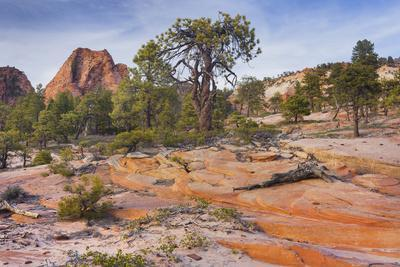 Rock Formations in the Lower Kolob Plateau, Pine, Zion National Park, Utah, Usa