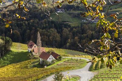 Europe, Austria, Styria, South-Styrian Wine Route, Wine Farm