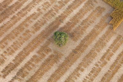Aerial Shot of Field at Bagan, Myanmar