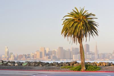 Avenue of the Palma, Treasure Island, Skyline San Francisco, California, Usa