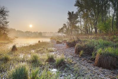 Austria, Lower Austria, SchŸttlau, KŸhwšrter Water, National Park Danube Meadows