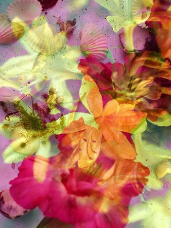 Photographic Layer Work from Lilies and Seashells